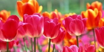 Spring Image 01