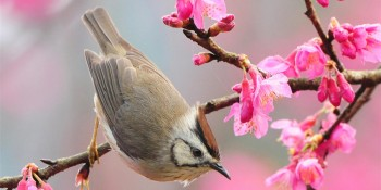 Spring Image 03